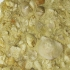 Фрагмент морского дна с ископаемыми брахиоподами.