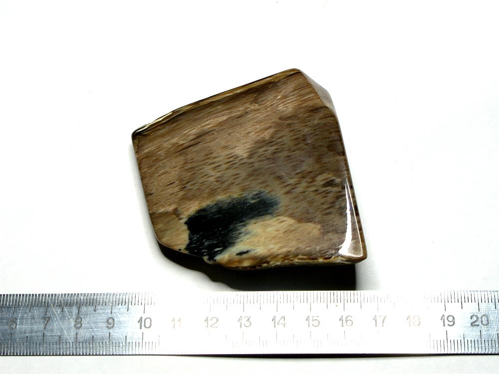 Фрагмент окаменелой древесины (пальмы).