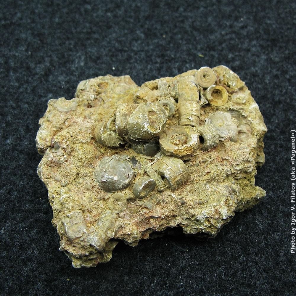 Фрагмент морского дна с криноидами (морскими лилиями).