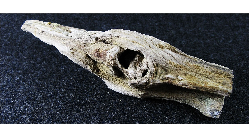 Фрагмент окаменелой древесины.